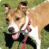 Adopt A Pet :: Ally - Macomb, IL
