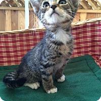 Adopt A Pet :: Johnny - san diego, CA
