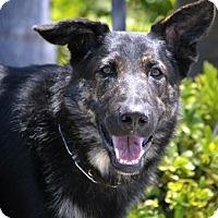 Adopt A Pet :: Kylo - Mira Loma, CA
