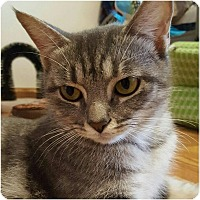 Adopt A Pet :: Zeena - Evans, WV