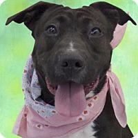 Adopt A Pet :: Nina - Cincinnati, OH