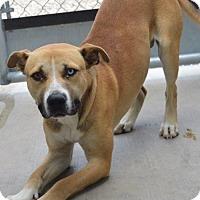 Adopt A Pet :: rodney - Midvale, UT