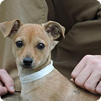 Adopt A Pet :: Jackson - Berkeley Heights, NJ