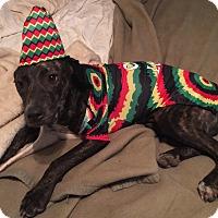 Adopt A Pet :: Lil'bit - Carlisle, PA