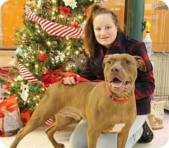 American Pit Bull Terrier Mix Dog for adoption in Elyria, Ohio - Lucy