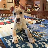 Adopt A Pet :: Arwen - Kittery, ME