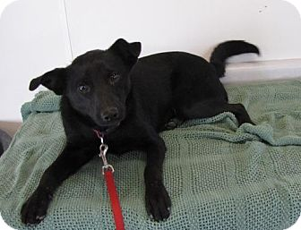 Terrier (Unknown Type, Medium) Mix Dog for adoption in Providence, Rhode Island - Onyx
