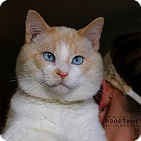 Adopt A Pet :: Coconut - Edwardsville, IL