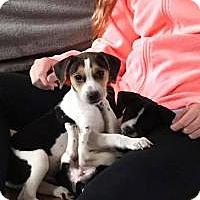 Adopt A Pet :: Mork - Marlton, NJ