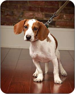 Dog Training Owensboro Ky