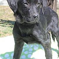 Adopt A Pet :: Tiana - Wytheville, VA