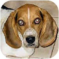 Adopt A Pet :: Lance - Phoenix, AZ