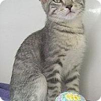 Adopt A Pet :: Thunder - Seminole, FL