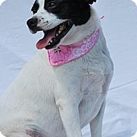 Rat Terrier Mix Dog for adoption in Harrodsburg, Kentucky - Pearl