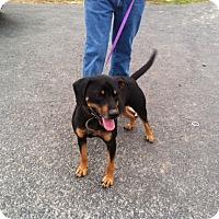 Adopt A Pet :: Ellie - Providence, RI