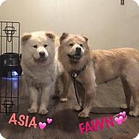 Adopt A Pet :: ASIA - Dix Hills, NY