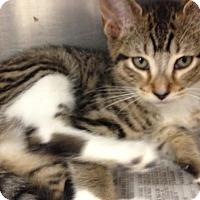 Adopt A Pet :: Carrie Underwood - East Brunswick, NJ