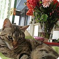 Adopt A Pet :: Aurora - Oakland, CA