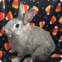 Adopt A Pet :: Magnolia - Columbus, OH