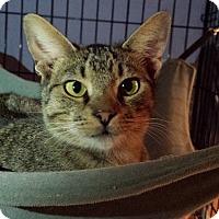 Adopt A Pet :: Zeb - Clarkson, KY