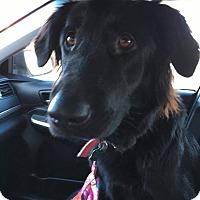 Adopt A Pet :: Noelle - Ogden, UT