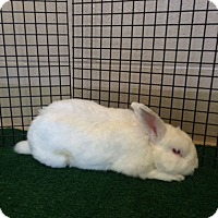 Adopt A Pet :: Buster - Chula Vista, CA