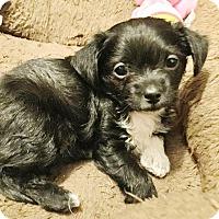 Adopt A Pet :: Jersey - Brea, CA