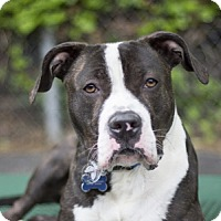 Adopt A Pet :: Prince - Port Washington, NY