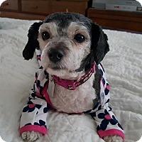 Adopt A Pet :: Adelaide - Sheridan, OR