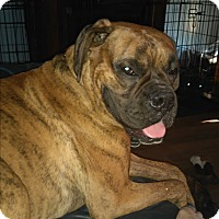 Adopt A Pet :: Jack - Northumberland, ON