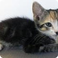 "Adopt A Pet :: Aami ""powerful girl"" - Mission Viejo, CA"