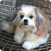 Adopt A Pet :: Suki - Woonsocket, RI