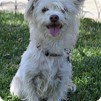 Adopt A Pet :: Hazel - Palo Alto, CA