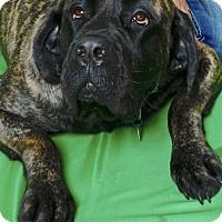 Adopt A Pet :: NYSSA - Gloucester, VA