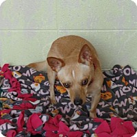 Adopt A Pet :: Popi - Crown Point, IN