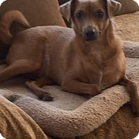 Adopt A Pet :: Benji - Phoenix, AZ