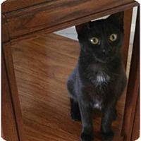 Adopt A Pet :: Jessie - Hampton, VA
