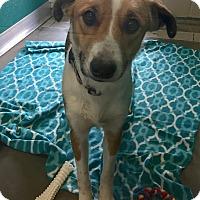 Adopt A Pet :: Celina - Wilmington, DE