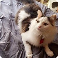 Adopt A Pet :: Zander - Apex, NC