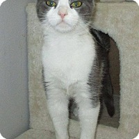 Adopt A Pet :: Sprinkles - Middletown, OH