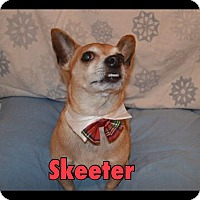 Adopt A Pet :: Skeeter - Indianapolis, IN