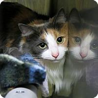 Adopt A Pet :: Ms. Gizmo - Northbrook, IL