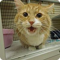 Adopt A Pet :: Cooper - Medina, OH