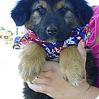 Adopt A Pet :: Bear boy cutest - Sacramento, CA