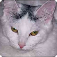 Adopt A Pet :: Lemur - Scottsdale, AZ