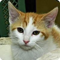 Adopt A Pet :: Wattson - Cheyenne, WY