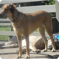 Adopt A Pet :: *Brody - Winder, GA