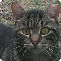Adopt A Pet :: Hoss - Columbia, MD