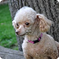 Adopt A Pet :: SASHA - Elk River, MN