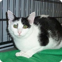 Adopt A Pet :: Chin Chin - Tillamook, OR